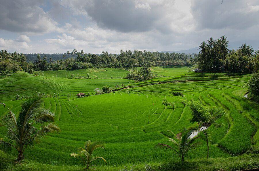 Volar barato a Bali