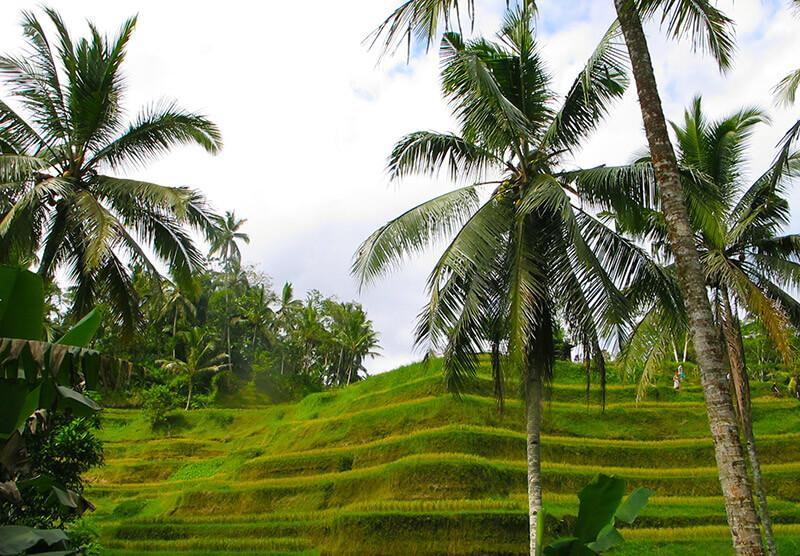 Viajar a Indonesia - Ubud, Bali